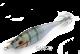 WEAK FISH BUKVA 3.0  SARGO